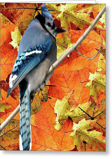 Photos Of Autumn Mixed Media Greeting Cards - Perched In Autumn  Greeting Card by Debra     Vatalaro