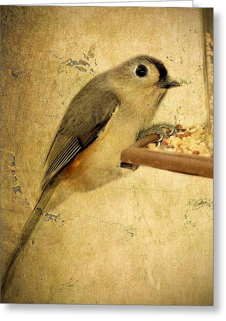 Bird-feeder Greeting Cards - Perched Greeting Card by Kathy Jennings