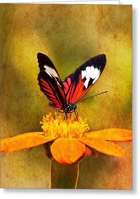 Florida Flowers Greeting Cards - Perching a Flower Greeting Card by Eggers   Photography