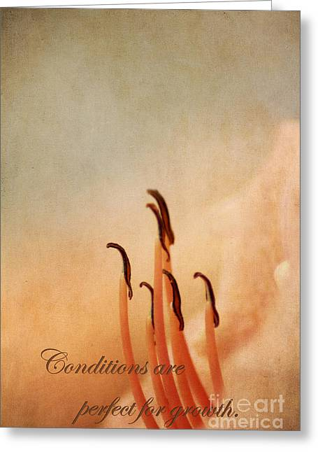Day Lilly Greeting Cards - Perfect Greeting Card by Darren Fisher