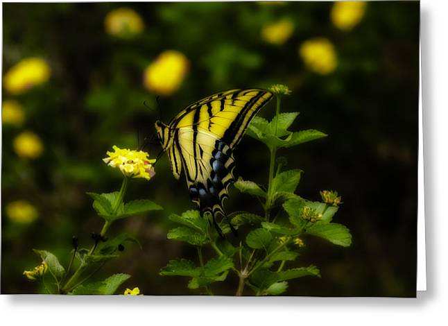 Butterfly Greeting Cards - Perfect Landing Greeting Card by Kelly Rader