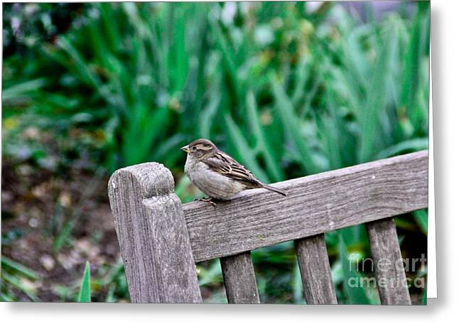 Sparrow Greeting Cards - Perfectly Posing Greeting Card by Extrospection Art