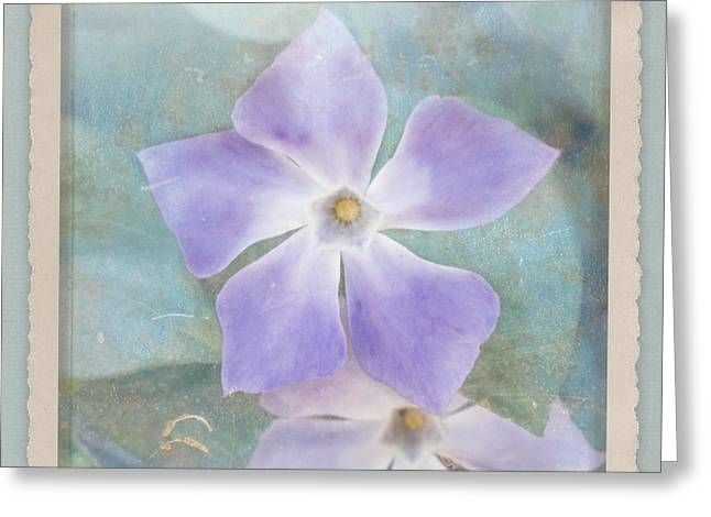 Vinca Flowers Greeting Cards - Periwinkle Stars Greeting Card by Cindy Garber Iverson