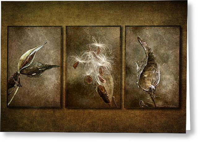 Seedpods Greeting Cards - Perpetual Generations Greeting Card by Dale Kincaid