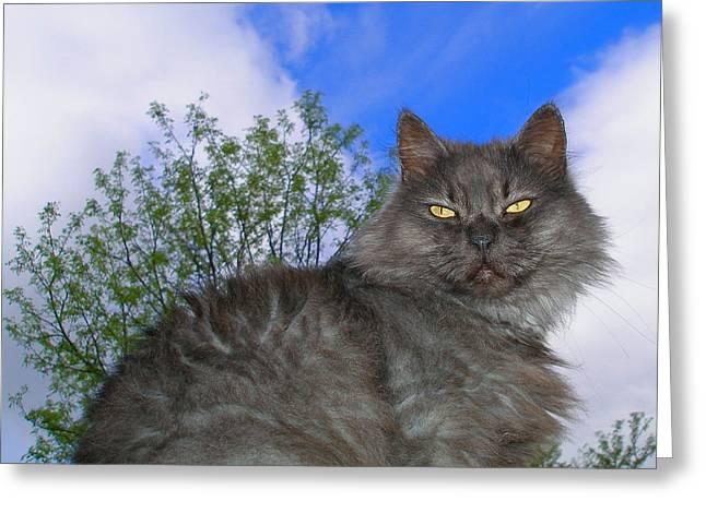 Photos Of Cats Digital Greeting Cards - Persian King Cat Greeting Card by Zsuzsa Balla