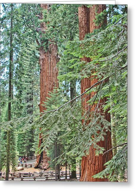 Sequoia National Park Greeting Cards - Perspective Greeting Card by Heidi Smith