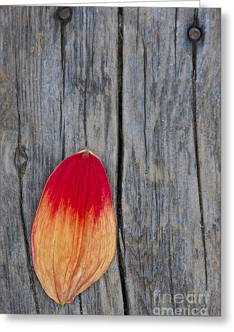 Petal On Wood Greeting Card by Sean Griffin