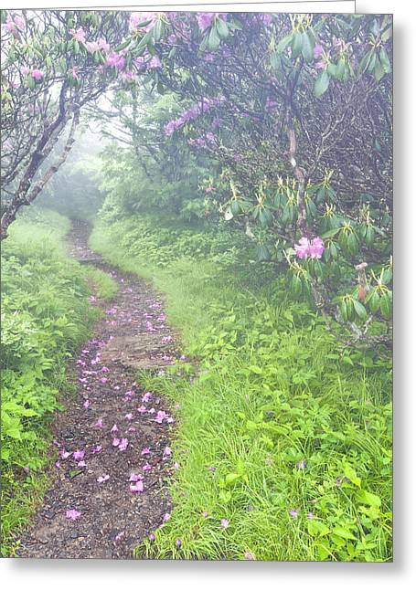 Petaled Path Greeting Card by Rob Travis