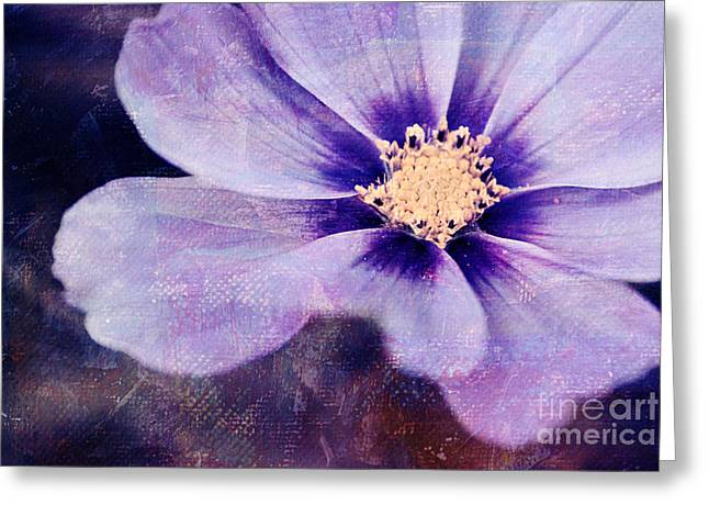 Flora Photography Greeting Cards - Petaline - 06bt04b Greeting Card by Variance Collections