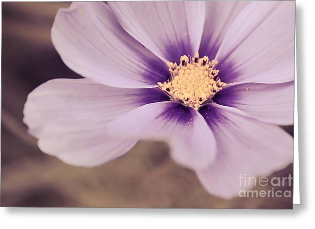 Flora Photography Greeting Cards - Petaline - p04a Greeting Card by Variance Collections