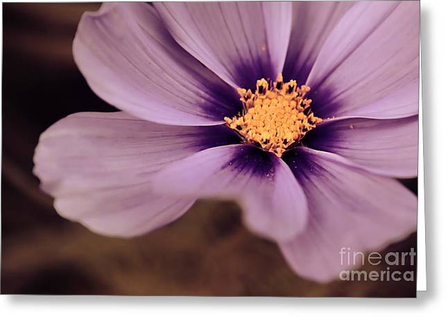 Flora Photography Greeting Cards - Petaline - p04d Greeting Card by Variance Collections