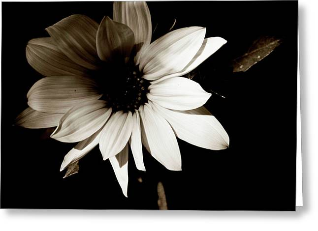 Edmonton Photographer Greeting Cards - Petals fo Truth Greeting Card by Jerry Cordeiro