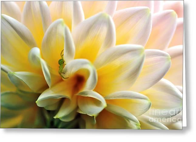 Hiding Greeting Cards - Petals n Patterns Greeting Card by Kaye Menner