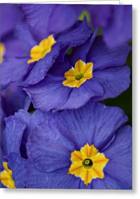 Ruth Macleod Greeting Cards - Petals Greeting Card by Ruth MacLeod