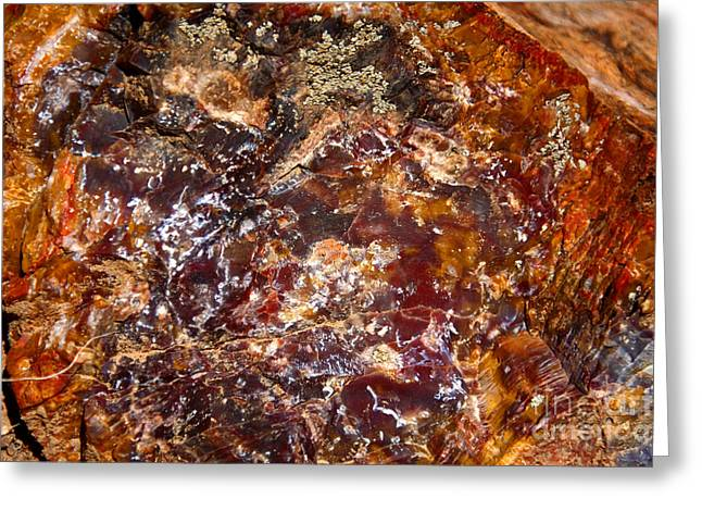 Petrified Forest Greeting Cards - Petrified Colours Greeting Card by Aidan Moran