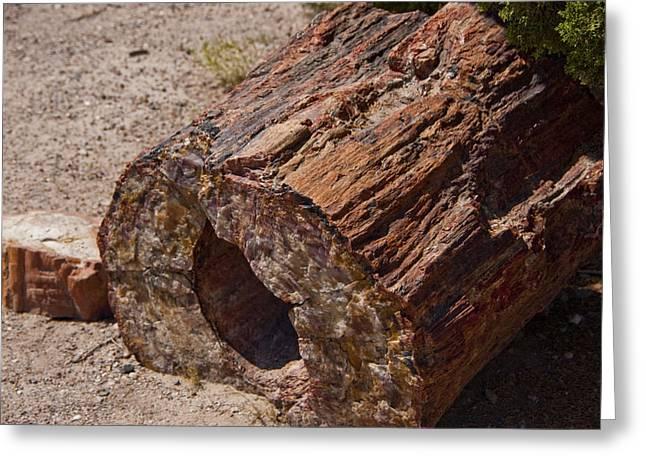 Petrified Forest Arizona Greeting Cards - Petrified Forest Greeting Card by Jon Berghoff