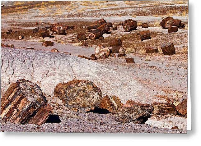 Petrified Forest National Park Greeting Cards - Petrified Forest National Park Greeting Card by James BO  Insogna