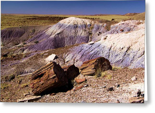 Petrified Forest National Park Greeting Cards - Petrified Logs In The Badlands Greeting Card by Adam Jewell