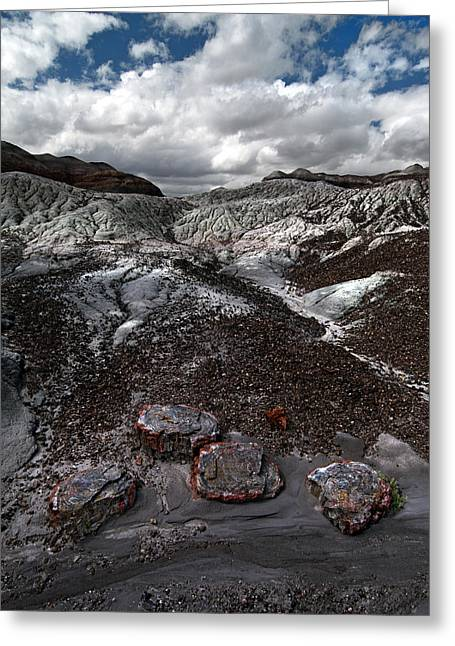 Petrified Forest Arizona Greeting Cards - Petrified Greeting Card by Murray Bloom