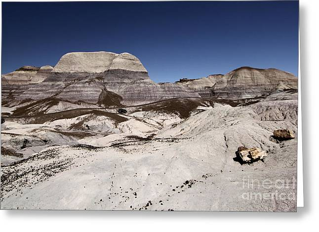 Petrified Forest National Park Greeting Cards - Petrified Trail Greeting Card by Adam Jewell