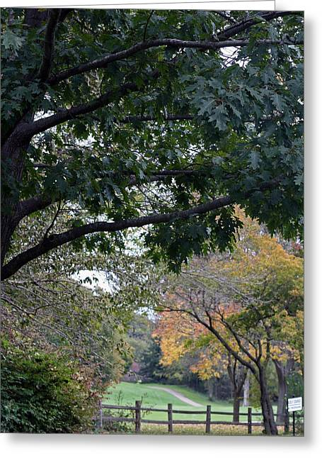 Petrifying Springs Golf Course Greeting Card by Kay Novy