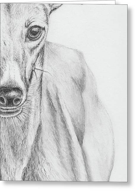 Rescue Drawings Greeting Cards - Petunia II Greeting Card by Teresa Vecere