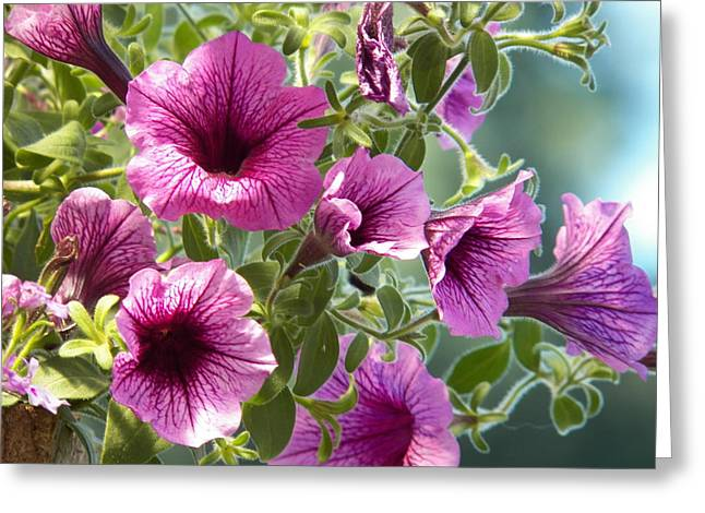 Photograph Tapestries - Textiles Greeting Cards - Petunias Greeting Card by Laurie Kidd