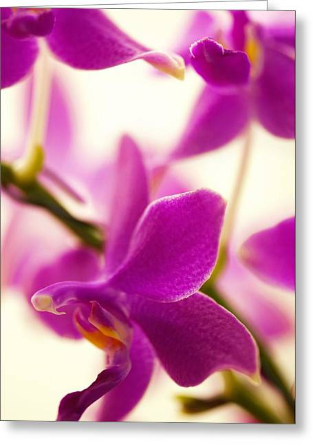 Flying Orchid Greeting Cards - Phalaenopsis Flying Fire sweetheart Greeting Card by Maria Mosolova