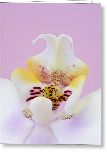 Phalaenopsis Labellum (phalaenopsis Sp.) Greeting Card by Lawrence Lawry