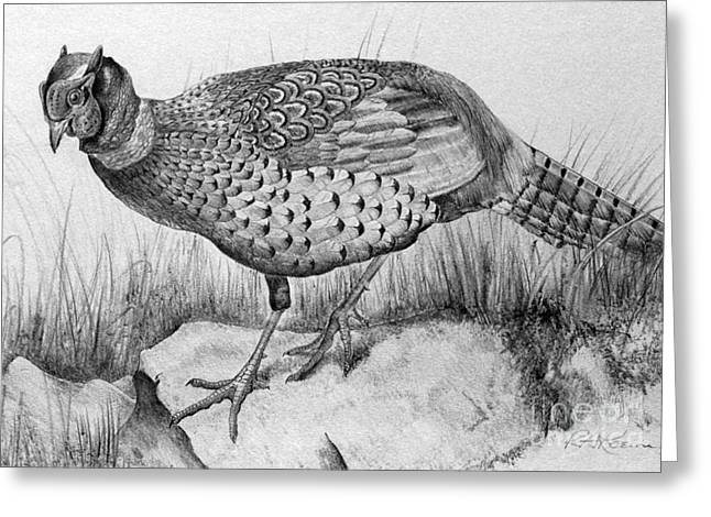 Kaelin Drawings Greeting Cards - Pheasant in the Wild Greeting Card by Roy Kaelin