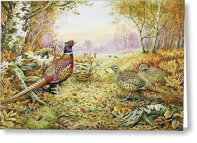 Pheasants in Woodland Greeting Card by Carl Donner