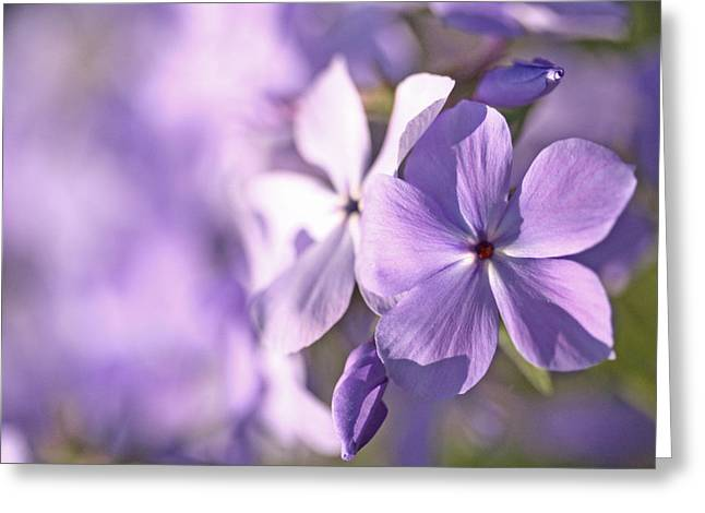 Purple Phlox Greeting Cards - Phlox Greeting Card by Don Ziegler