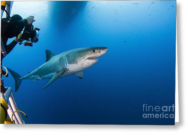 Pictures Of Sea Life Greeting Cards - Photographer Taking A Picture Of A Male Greeting Card by Todd Winner