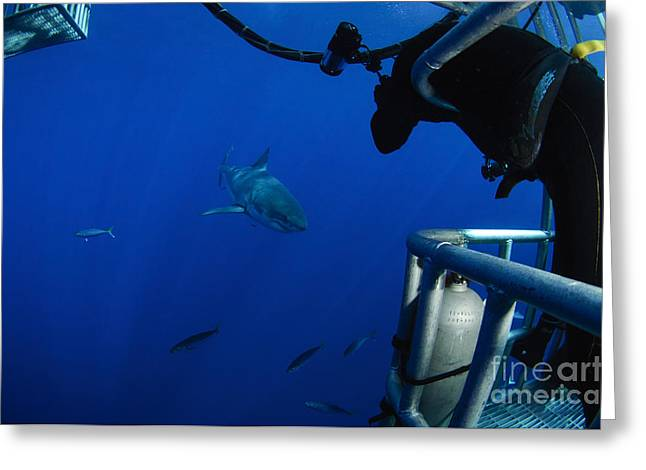 Pictures Of Sea Life Greeting Cards - Photographer Taking A Picture Greeting Card by Todd Winner
