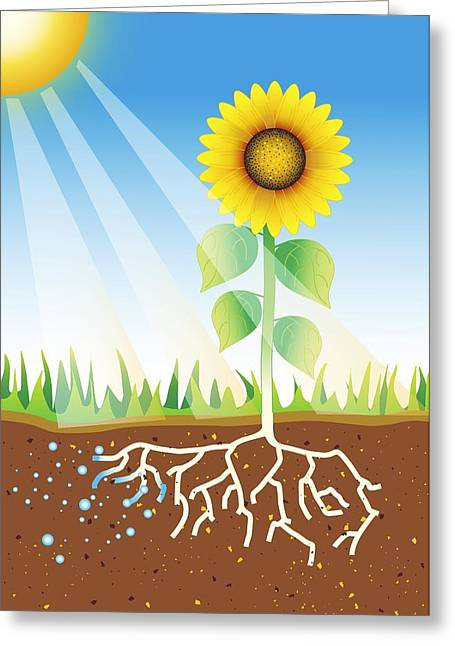 Best Sellers -  - Energy Conversion Greeting Cards - Photosynthesis, Artwork Greeting Card by David Nicholls