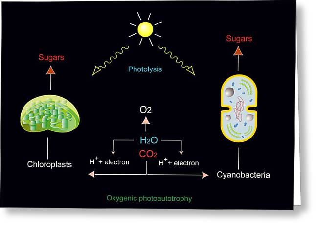Best Sellers -  - Energy Conversion Greeting Cards - Photosynthesis, Artwork Greeting Card by Francis Leroy, Biocosmos