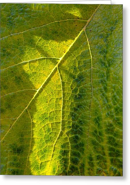 Grape Leaves Greeting Cards - Photosynthesis In Progress Greeting Card by Everett Bowers