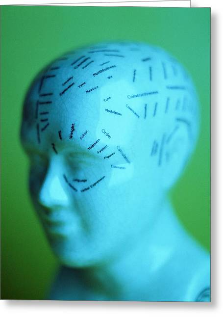 Historical Images Greeting Cards - Phrenology Model Greeting Card by Lawrence Lawry