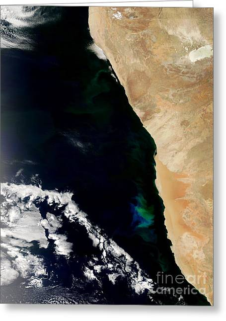 Phytoplankton Photographs Greeting Cards - Phytoplankton Bloom Off Nambia Greeting Card by Nasa