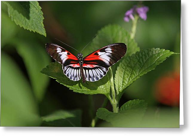 Piano Key Butterfly Greeting Card by Juergen Roth