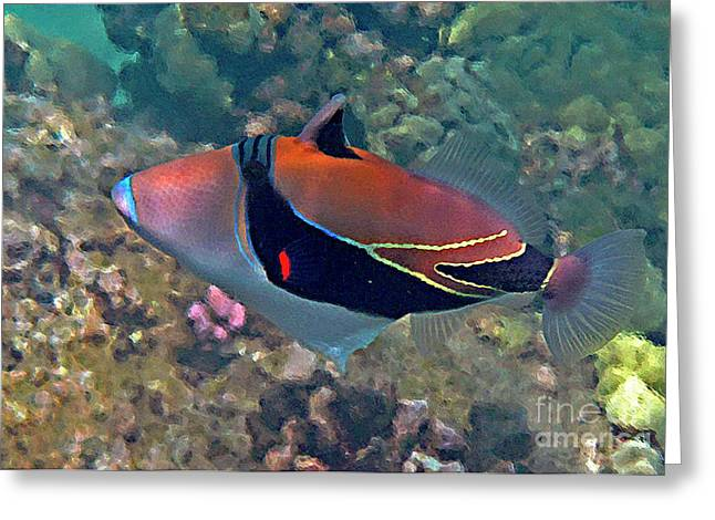 Reef Fish Greeting Cards - Picasso Triggerfish Up Close Greeting Card by Bette Phelan