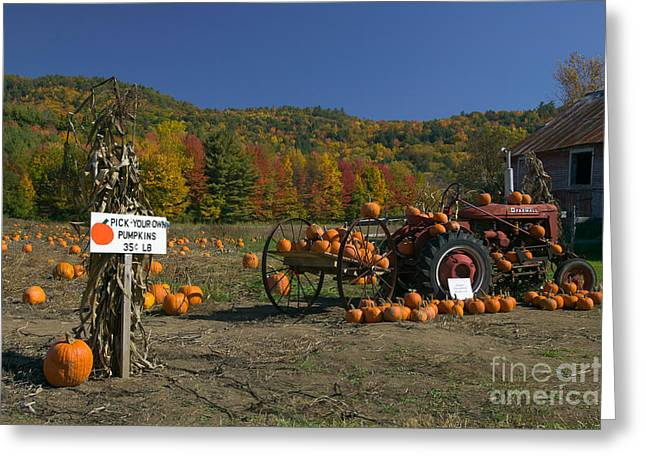 Mccormick Farmall Greeting Cards - Pick Your Own Pumpkins Greeting Card by Clarence Holmes