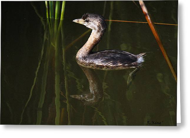 Secretive Birds Greeting Cards - Pied-billed Grebe In The Reeds Greeting Card by Roena King