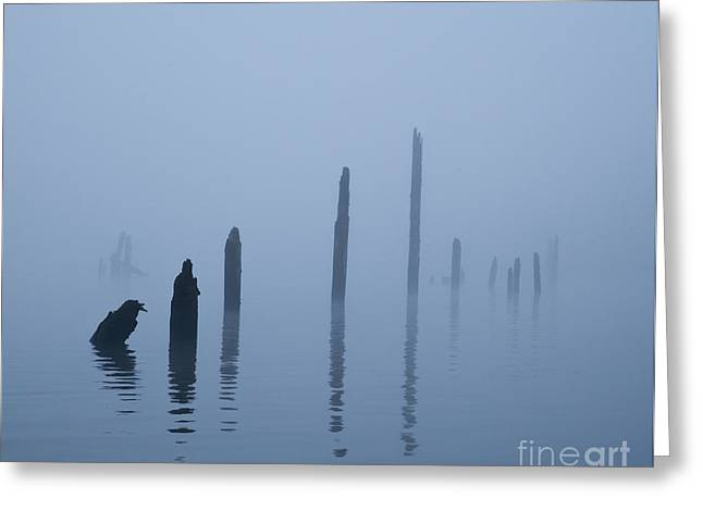 Asymmetrical Greeting Cards - Pier Pilings in Water Greeting Card by David Buffington