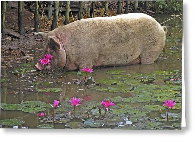 Domesticated Flower Greeting Cards - Pig Drinking Greeting Card by Bjorn Svensson