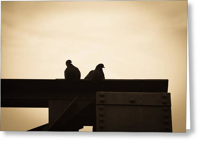 Common Greeting Cards - Pigeon and Steel Greeting Card by Bob Orsillo