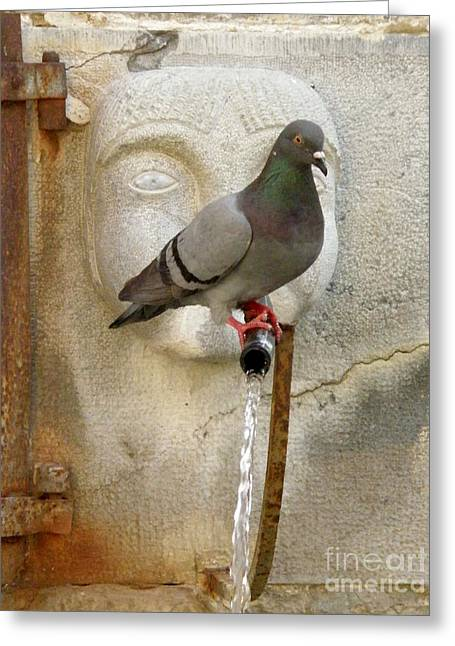 Pigeon At Fountain Face Greeting Card by Lainie Wrightson