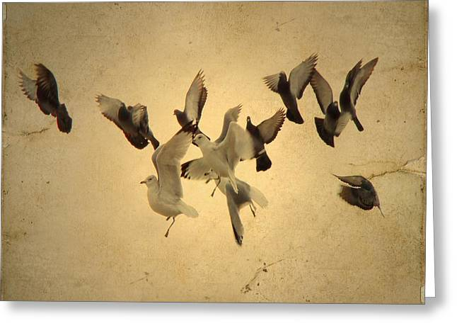 Pigeons And Seagulls Greeting Card by Gothicolors Donna Snyder