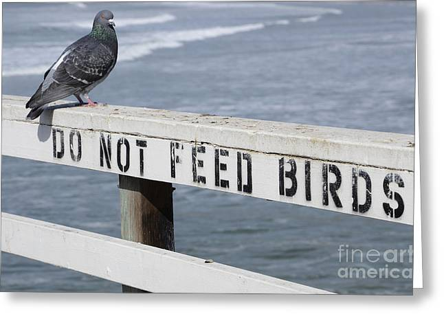 California Beach Greeting Cards - Pigeons Cannot Read Greeting Card by Bob Christopher