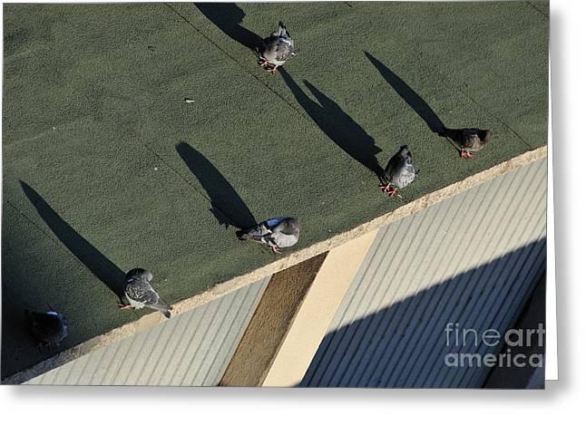 Sunbathing Greeting Cards - Pigeons sunbathing Greeting Card by Sami Sarkis